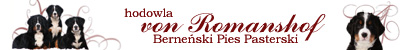 von Romanshof - Berneński Pies Pasterski