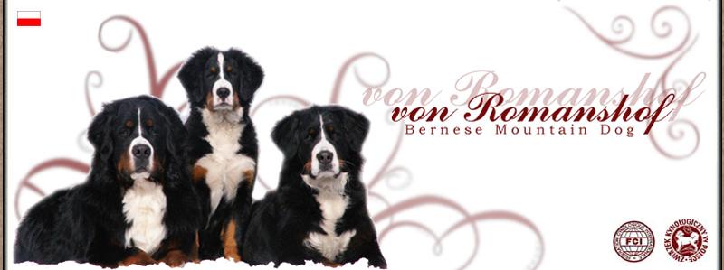 Bernese Mountain Dog - von Romanshof